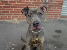 available animals - Rebound Hounds Res-Q Pet Adoption, Animal Adoption, All Gods Creatures, Animal Welfare, Animal Rights, Dogs And Puppies, Doggies, Pet Birds, Animal Rescue