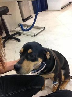 Thank you Underdog Rescue for saving this sweet boy Rocky and getting him the much needed medical treatment.  If you would like to help with vet expenses for Rocky, please read the article for information.  Thank you