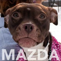 Mazda is very sweet & a volunteer favorite. Come & meet her at 184 Verona Street downtown ROC.