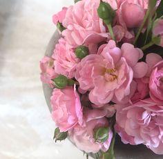 Die letzten Röschen aus dem Garten für dieses Jahr?