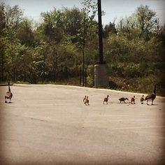 Family stroll #CanadianGeese #FamilyTime #walking Spiritual Life, Spirituality, Walking, Spaces, Instagram Posts, Spiritual, Walks, Hiking