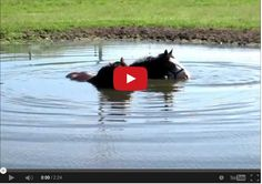 These Two Horses Are Relaxing In The Pond. But When They Started Blowing Bubbles? I Squealed! Animals And Pets, Funny Animals, Cute Animals, Funny Horses, All The Pretty Horses, Beautiful Horses, Horse Videos, Two Horses, Draft Horses