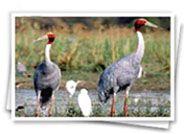 Rajasthan Wildlife Safari | Safari Tour Packages | Wildlife Safari Tours | India Wildlife Safari