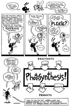 Photosynthesis comic, explains in detail.  Too cool.