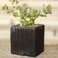 Succulent Shou Sugi Ban Wood Planter  Vertical by HammerandBrush, $40.00