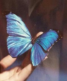 fandom inspiration: butterfly (Life is Strange)   chloe ...