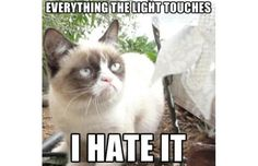 click through for The 50 Funniest Grumpy Cat Memes