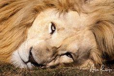 http://anna-phillips.com/wildlife-photography/