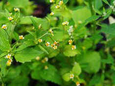 Healing Herbs, Beauty Hacks, Beauty Tips, Flora, Food And Drink, Fruit, Drinks, Plants, Drinking