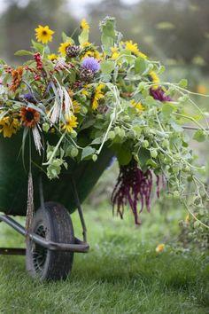 kruiwagen bloemen