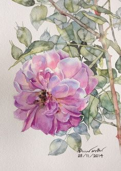 Rose painting Watercolor Cards, Watercolor And Ink, Watercolour Painting, Watercolor Flowers, Painting & Drawing, Watercolors, Vegetable Illustration, Beautiful Flowers Wallpapers, Colorful Drawings