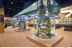 Custom Commercial Aquariums - Public Aquarium Design- Large Aquariums - Custom Aquariums California - Custom Aquariums New York - Living Color Enterprises