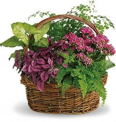 Secret Garden Basket Plants, Secret Garden Plant Basket - Teleflora.com