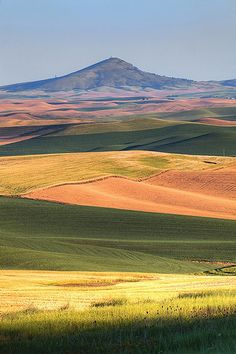I swear this has to be Steptoe Butte in Eastern Washington State, where I went to Camp Fire Girls day camp in the summers during the It was the tallest hill, and was surrounded by the Palouse Hills near Pullman, WA. Beautiful World, Beautiful Places, Wonderful Places, Nature Photography, Travel Photography, Evergreen State, Washington State, Pullman Washington, Palouse Washington