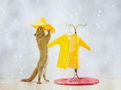 Onze Suus magazine archief sept-okt 2013_eekhoorns fotografie nancy rose squirrels 62