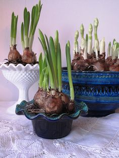 Springtime! Use your old ceramics and make a beautiful addition to your home.