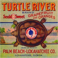 10X10 Loxahatchee Palm Beach Florida Turtle River Orange Fruit Crate Label Print | eBay