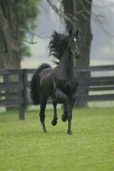 Black Beauty in a green field!