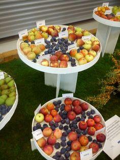 FLORA Flora, Fruit, The Fruit