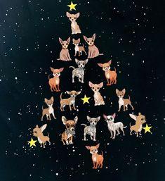 Happy Christmas....chihuahua tree #chihuahua