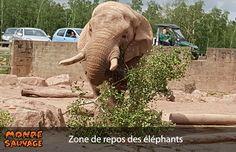 Enrichissement de l'enclos des éléphants.