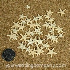 Micro Natural Starfish - Decorate wedding invitations, favors and place cards with tiny natural starfish. Use as table confetti at your beach wedding. www.yourweddingcompany.com