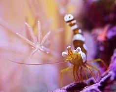 "enjoy the ""shrimps"" of the sea."