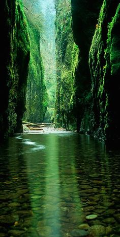the Columbia River Gorge National Scenic Area east of Portland, Oregon • photo: vanchocstraw on Flickr - Explore the World with Travel Nerd Nici, one Country at a Time. www.learndecoration.com