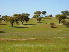 Campo Alentejano