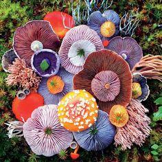 Mushrooms - Agaric - 750 Piece Puzzle