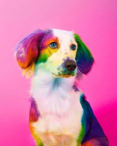New York Artist Covers Pictures In Rainbows Because Everything Is Better With Lots Of Color Der New Yorker Künstler deckt alles in Regenbogenfarben ab und [. Baby Animals Pictures, Cute Animal Pictures, Dog Pictures, Cute Little Animals, Cute Funny Animals, Rainbow Dog, Colorful Animals, Cute Dogs And Puppies, Funny Puppies