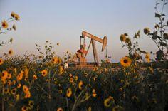 U.S. oil 'strippers' maneuver to keep pumping amid crude slump