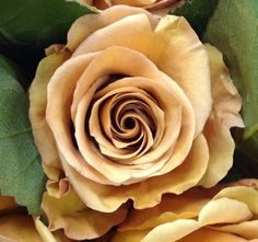 combo roses - super high demand so order asap Peach Flowers, Love Flowers, Yellow Flowers, Colorful Flowers, Flower Colors, Floral Wedding, Fall Wedding, Wedding Flowers, Yellow Wedding