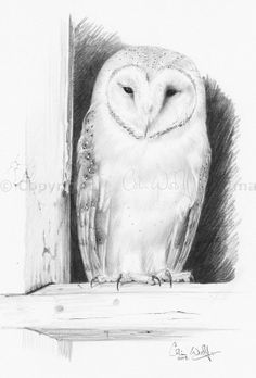 Pencil drawing of barn owl by Colin Woolf #owls #art #wildlife