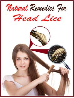 Advice on lice provides best treatment and services for head lice removal, head lice treatment, Lice Lady Treatment, lice help and lice treatment services in clinic or at home in Falls Church VA, DC & MD. Lice Remedies, Herbal Remedies, Health Remedies, Natural Remedies, Alternative Health, Alternative Medicine, Lice Removal, Holistic Medicine, Natural Cleaning Products