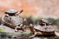 Turtles on Turtles