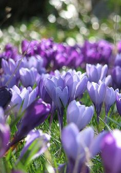 The winter was so long and hard this year that, when I saw the first crocus of spring, I nearly burst into tears.
