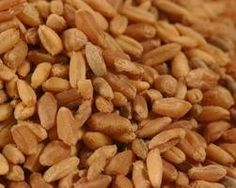 We offer a bulk discount when you purchase 10 lbs or more of the same seed or seed mixture - applies to the purchase of 10 lbs or more of one variety of seed or seed mixture. The 10 lbs will ship in a bag. No codes necessary. Just visit our Bulk Seeds Department  https://www.sprouthouse.com