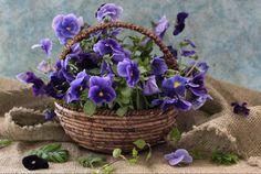 cesta de amores perfeitos