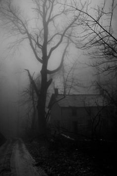 eerie landscape photograph fo house and tree in fog Spooky Places, Haunted Places, Haunted Houses, Creepy Old Houses, Abandoned Buildings, Abandoned Places, Belle Photo, Mists, Beautiful Places