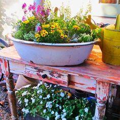 Gorgeous {Vintage Tub} turne {Container Garden!}