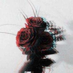 Hallucination Rose