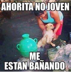 Ahorita no joven... me están bañando #meme #perros
