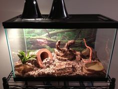 How to set up Corn snake vivarium-our snake needs a tank re-model :)
