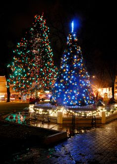 christmas trees on the plaza in prescott az - Teardrop Christmas Lights