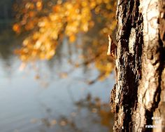 Fall photograph Autumn home decor by OverTheRainbowPrints on Etsy, $30.00