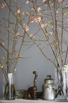 I love having branches like these in vases in the house. Brightens it up no end.