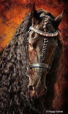 Wat een schitterend paardenhoofd.....lbxxx.