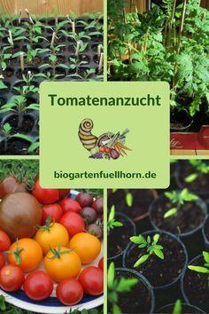 Möchtest Du dieses Jahr einmal selbst Deine Tomaten anziehen und brauchst noch Tipps und Anleitungen dazu? Der folgende Text wird Dir ein paar Hilfen dazu geben.