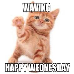 Wednesday is here and people are waiting for the weekend already. Check out the top 20 best and funny happy Wednesday memes bellow. Funny Wednesday Memes, Wednesday Morning Quotes, Wednesday Greetings, Good Morning Wednesday, Funny Good Morning Quotes, Monday Humor, Monday Quotes, Weekend Humor, Thursday Humor